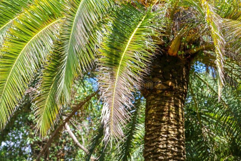 Palmiers en stationnement Climat subtropical photographie stock