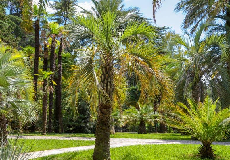 Palmiers en stationnement Climat subtropical images stock