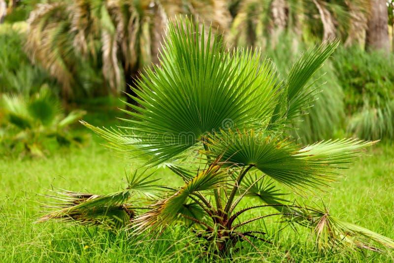 Palmiers en stationnement Climat subtropical images libres de droits
