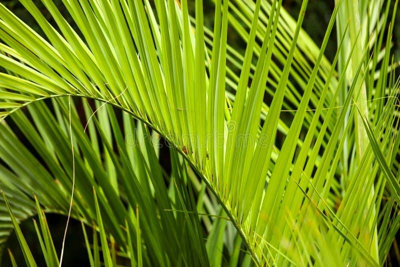 Palmiers en stationnement Climat subtropical photographie stock libre de droits