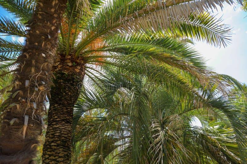 Palmiers en stationnement Climat subtropical image stock