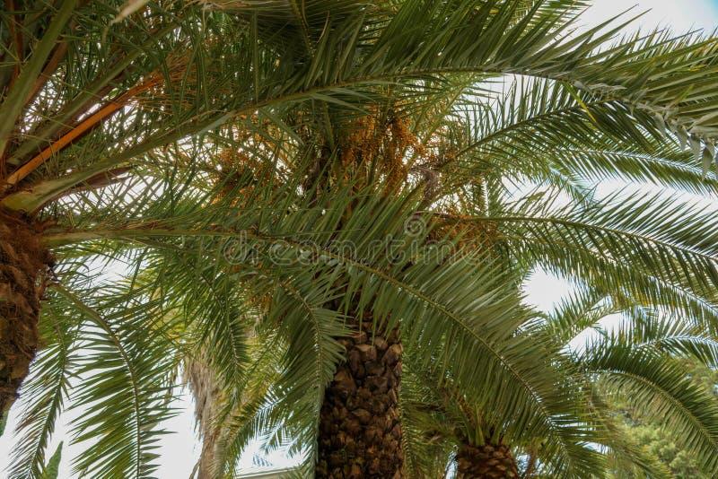 Palmiers en stationnement Climat subtropical photos libres de droits