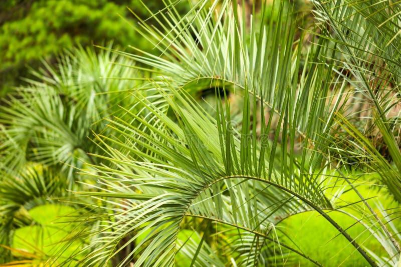 Palmiers en stationnement Climat subtropical photo libre de droits