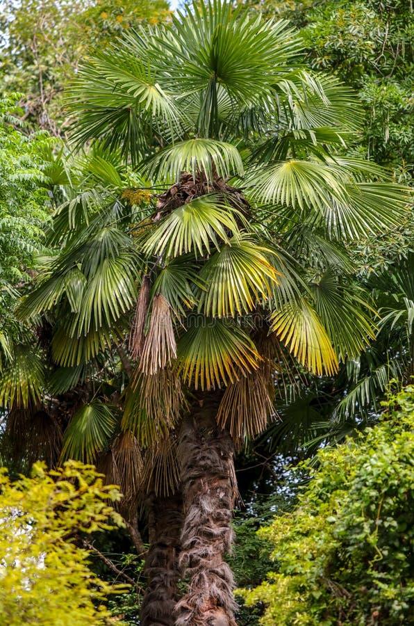 Palmiers en stationnement Climat subtropical photo stock