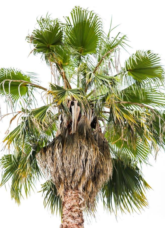 Palmiers en stationnement Climat subtropical image libre de droits