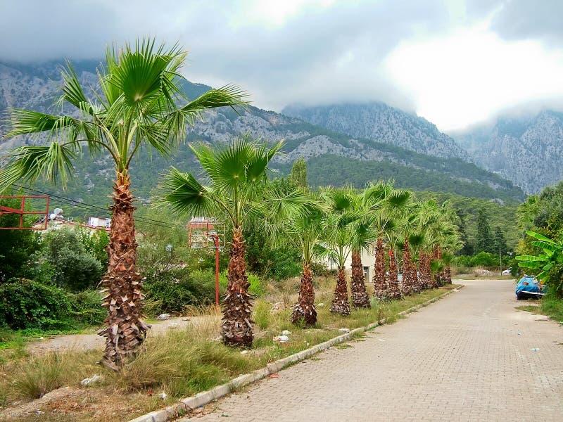 Palmiers en Turquie photographie stock