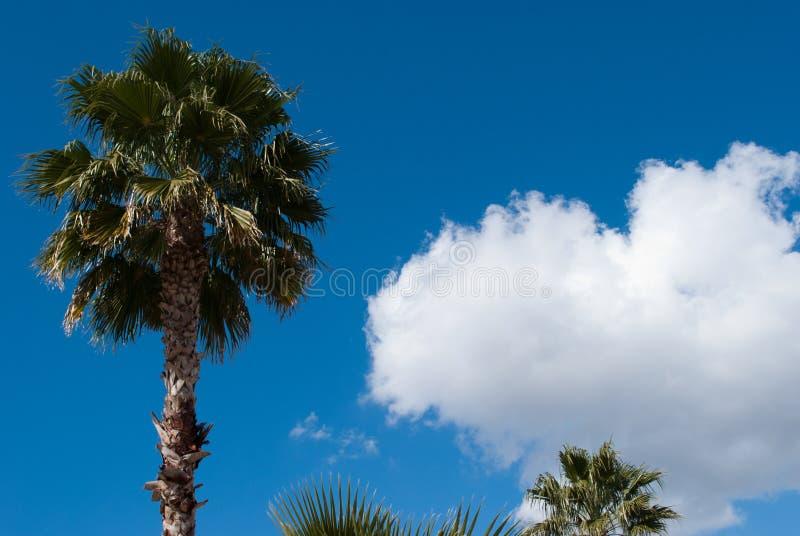 Palmiers et cieux bleus image stock