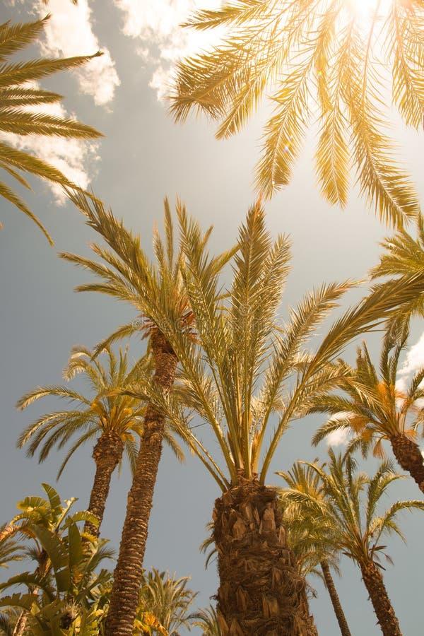 Palmiers et le ciel photographie stock libre de droits