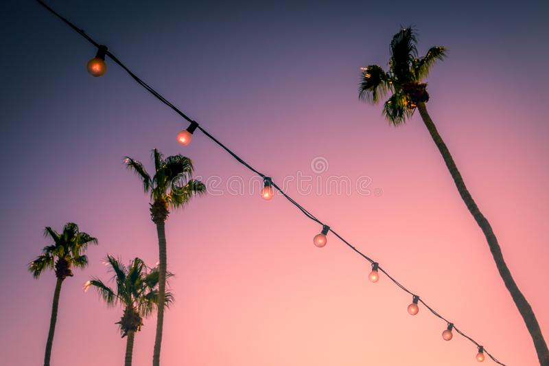 Palmiers et lumières de partie de ficelle au Palm Springs la vallée de Coachella de coucher du soleil images libres de droits