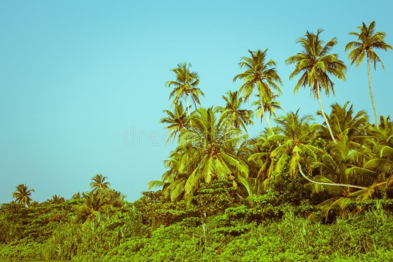 Palmiers et palétuvier de noix de coco dans les tropiques images stock