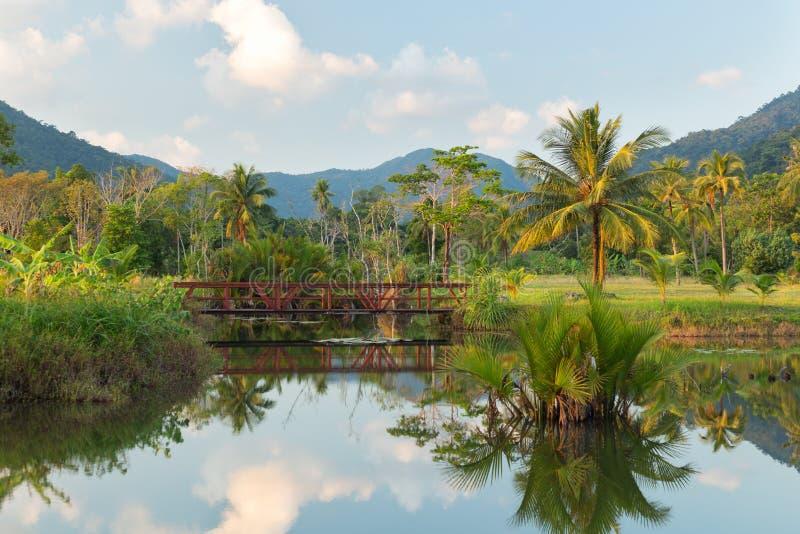 Palmiers et réflexion images stock