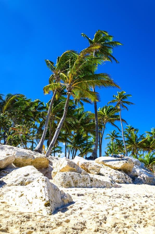 Palmiers exotiques sur la côte rocheuse des Caraïbe photographie stock