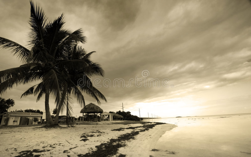 Palmiers par la plage image stock