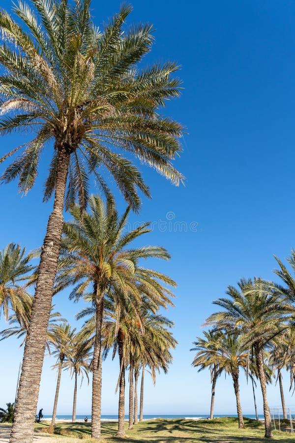 Palmiers par la plage en Valencia Spain le 25 février 2019 Personnes non identifiées photo stock