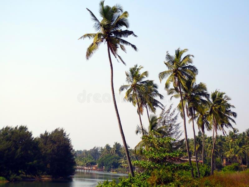Palmiers par la rivière images stock