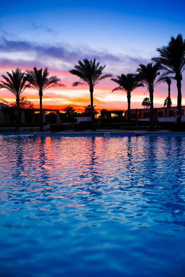 Palmiers près de la piscine au coucher du soleil image stock
