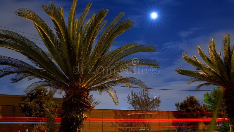 Palmiers sous la lune photo libre de droits