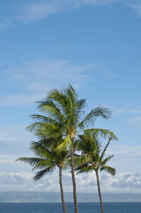Palmiers sur l'horizon images stock