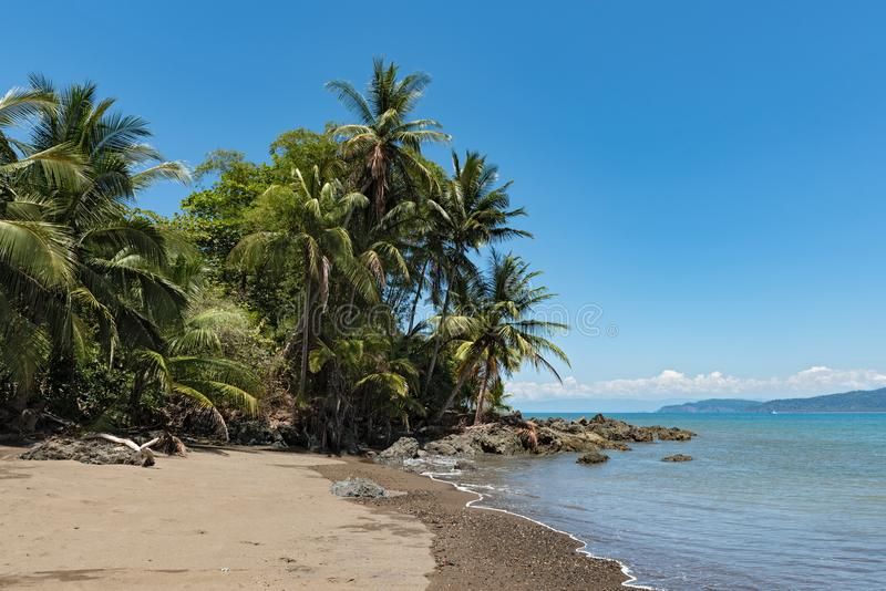Palmiers sur la plage chez Drake Bay, Costa Rica images stock