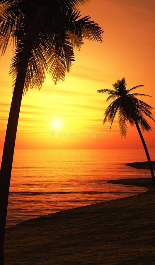 Palmiers sur la plage de coucher du soleil photographie stock libre de droits