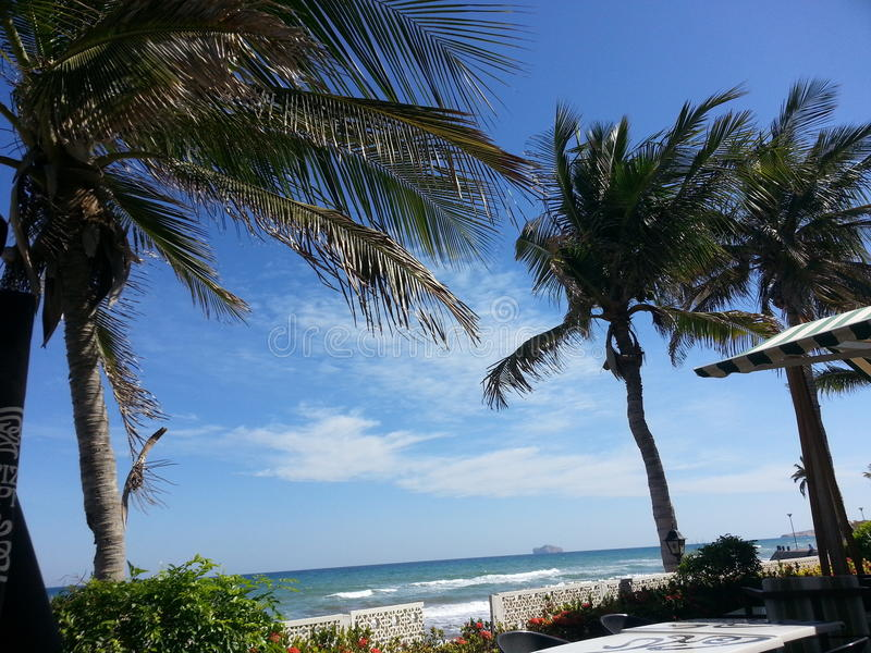 Palmiers sur la plage de Qurum photos stock