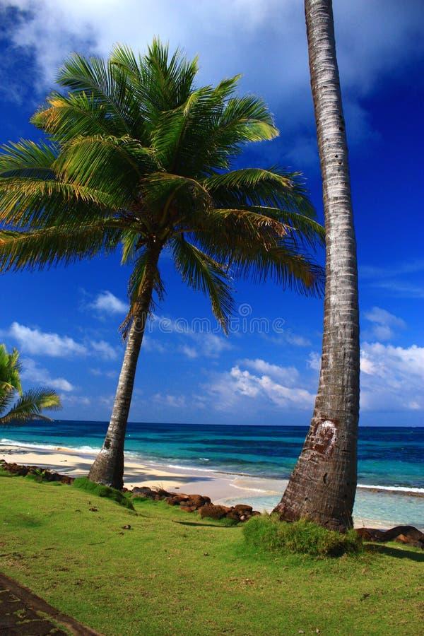 Palmiers sur la plage devant la mer des Caraïbes de turquoise photos libres de droits