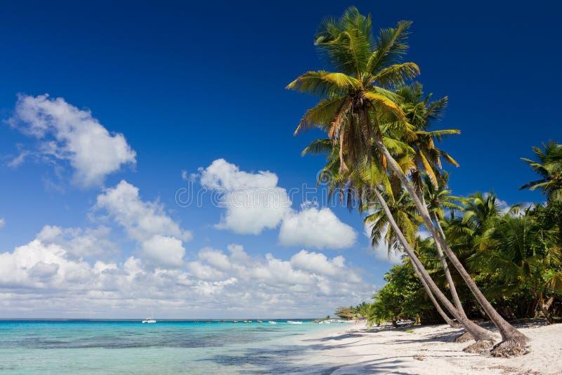 Palmiers sur la plage tropicale photo libre de droits