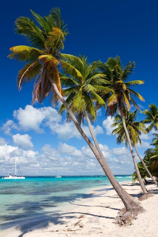 Palmiers sur la plage tropicale, mer des Caraïbes photos stock