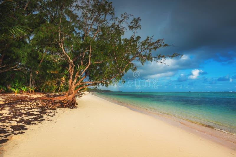 Palmiers sur la plage tropicale, République Dominicaine  Île de Saona images libres de droits