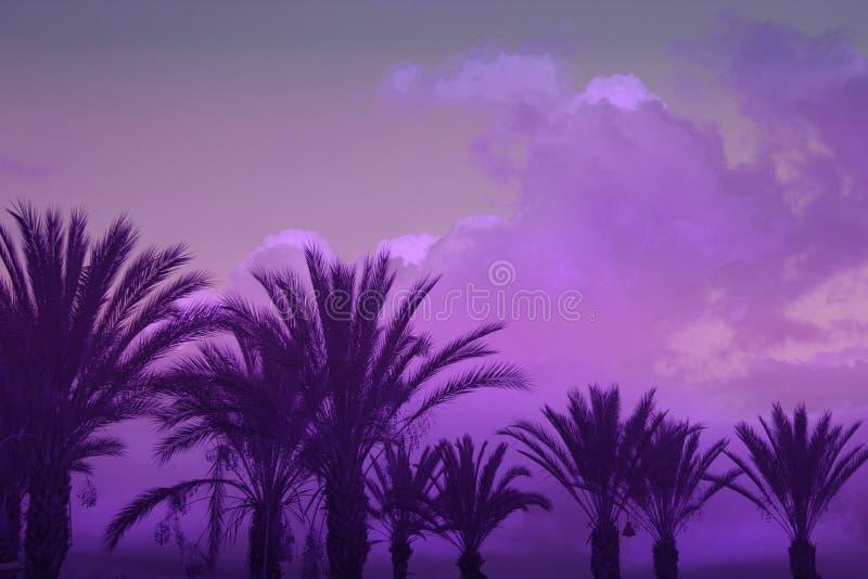 Palmiers sur le fond ultra-violet modifié la tonalité de ciel photographie stock libre de droits