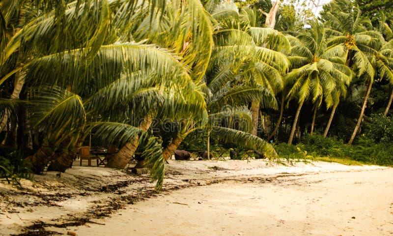 Palmiers sur une plage image stock