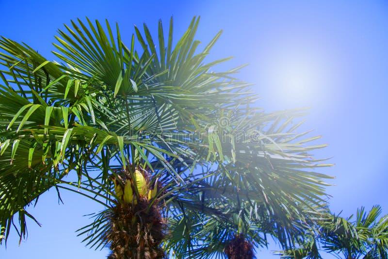 Palmiers tropicaux éclairés à contre-jour avec le rayon du soleil Vacances de vacances de voyage d'?t? Photo colorée de concept image stock