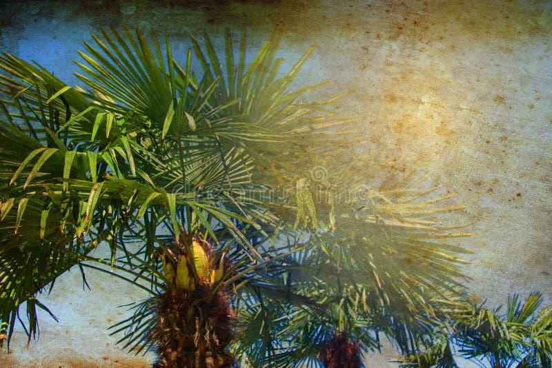 Palmiers tropicaux ?clair?s ? contre-jour avec le rayon du soleil Concept de vacances de vacances de voyage d'été Photo colorée d photo libre de droits