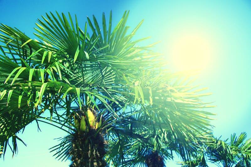 Palmiers tropicaux ?clair?s ? contre-jour avec le rayon du soleil Vacances de vacances de voyage d'?t? Photo color?e de concept photographie stock libre de droits