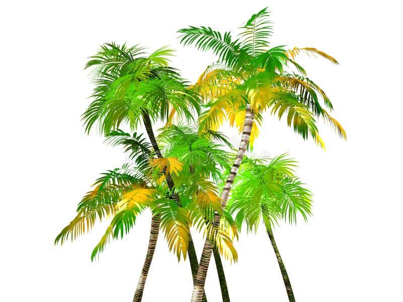Palmiers tropicaux, d'isolement illustration stock