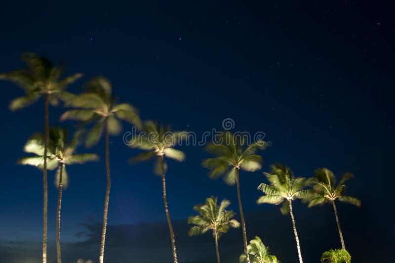 Palmiers tropicaux la nuit photographie stock