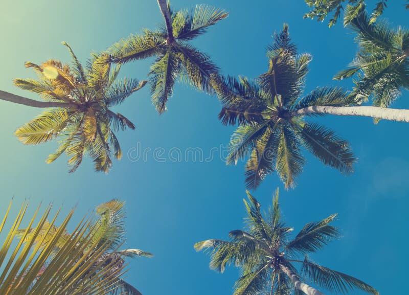 Palmiers tropicaux, photo modifiée la tonalité images stock