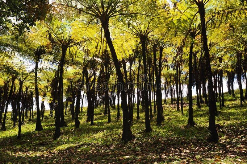 Palmiers verts sur l'île des Îles Maurice photographie stock