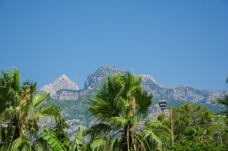 Palmiers verts sur un fond des montagnes photographie stock