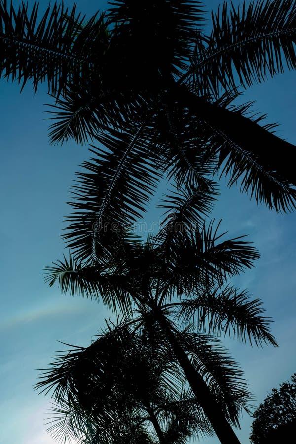 Palmkokospalm in sihouette tegen de blauwe hemel royalty-vrije stock foto