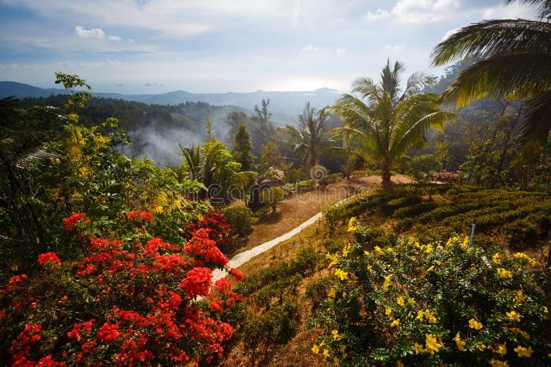 Palmlandschap, bloemen, bergen aan Thailand Samui royalty-vrije stock fotografie