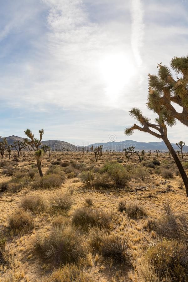 Palmliljan gömma i handflatan och vaggar bildande i Joshua Tree National Park, Cal arkivfoto