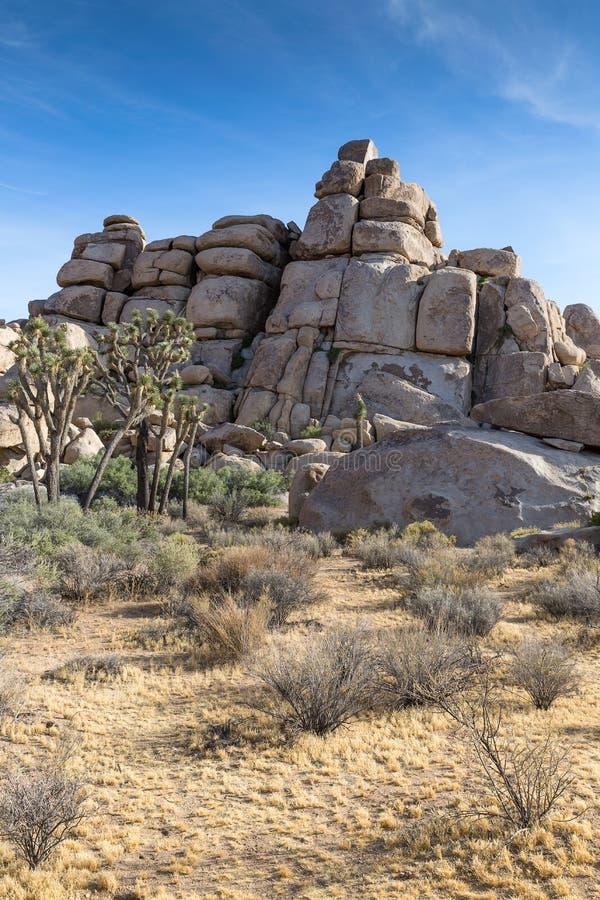 Palmliljan gömma i handflatan och vaggar bildande i Joshua Tree National Park, Cal royaltyfri fotografi