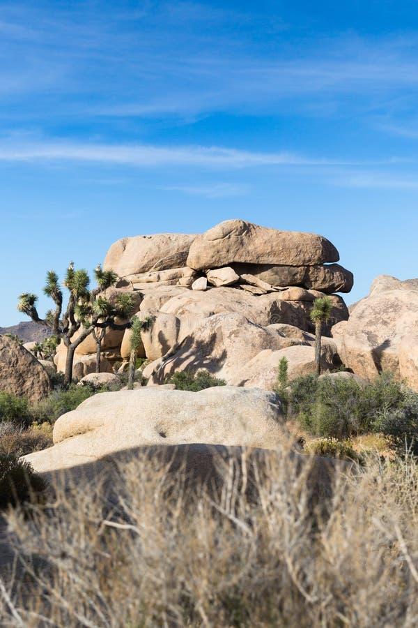 Palmliljan gömma i handflatan och vaggar bildande i Joshua Tree National Park, Cal royaltyfri bild