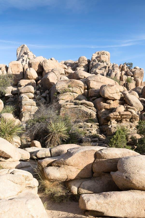 Palmliljan gömma i handflatan och vaggar bildande i Joshua Tree National Park, Cal fotografering för bildbyråer