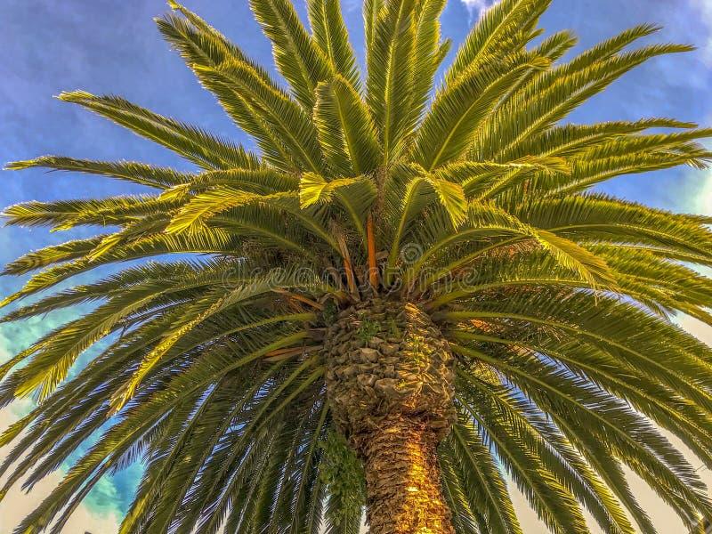 Palmliljan g?mma i handflatan ormbunksblad med bakgrund f?r bl? himmel fotografering för bildbyråer