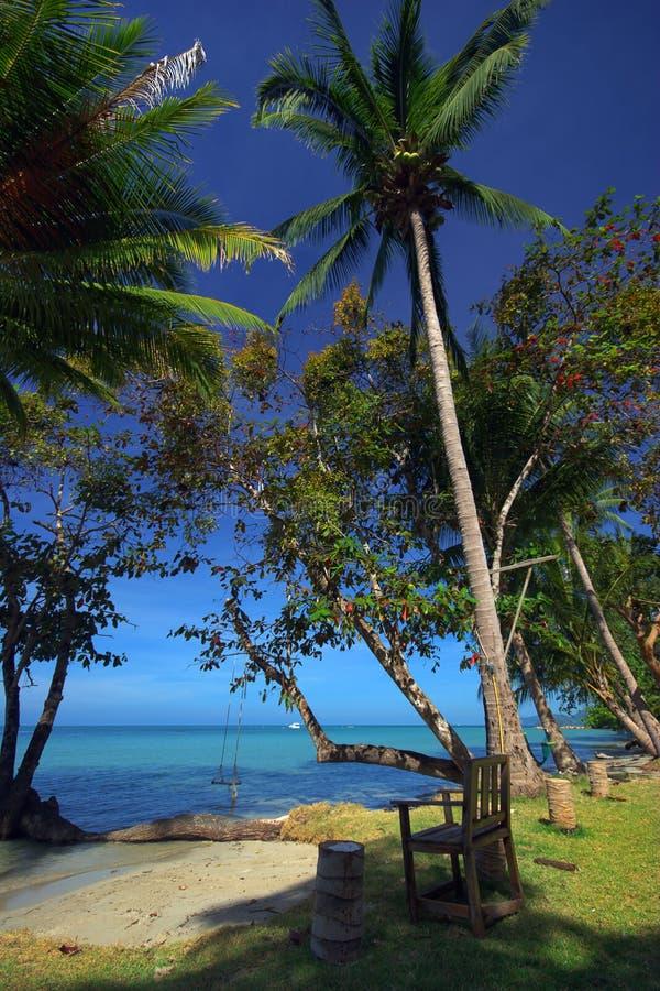 Palmns sur la plage photo stock