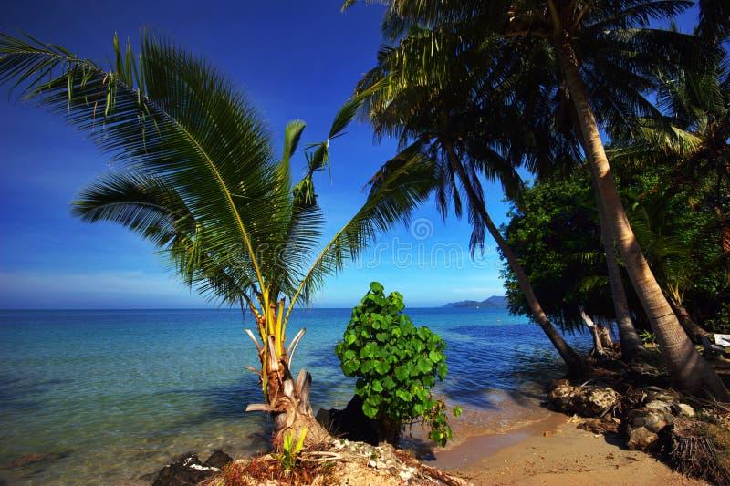 Palmns sur la plage images stock