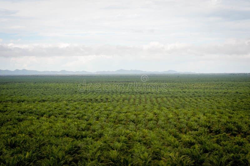 Palmolieaanplanting royalty-vrije stock afbeeldingen