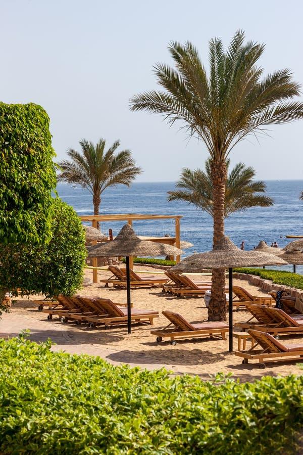 Download Palmowa Aleja Na Tropikalnej Egipcjanin Plaży Obraz Stock - Obraz złożonej z przeznacza, africa: 53781335